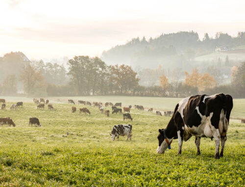 The Benefits Of Cow Manure Compost