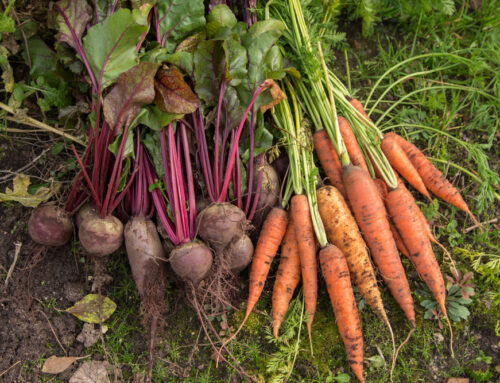 Edible Landscaping: Using Organic Fertiliser